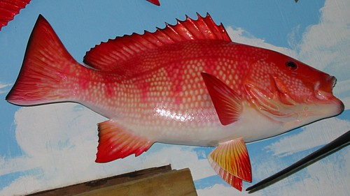 Pics for snapper fish species for Invasive fish in florida